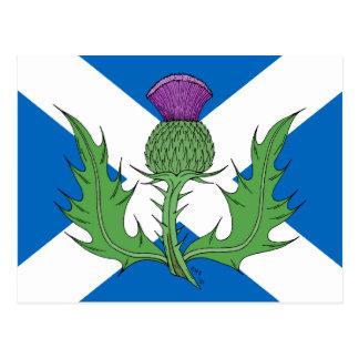 Carte Postale Chardon écossais et Saltire