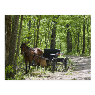 Carte Postale Chariot hippomobile attaché en bois