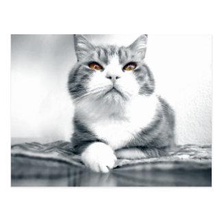 Carte Postale Chat avec les yeux oranges de puissance