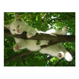 Carte Postale Chat blanc dans l'arbre