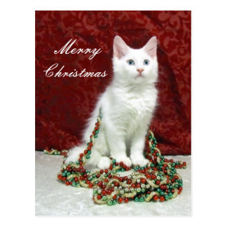 Carte Postale Chat, chaton, Noël, délivrance, photo