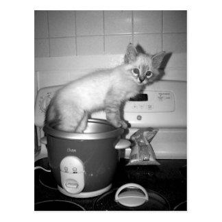 Carte Postale chat dans le fabricant de riz