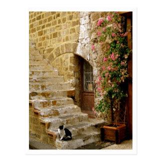 Carte Postale Chat dans les escaliers