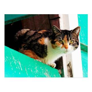 Carte Postale Chat de calicot curieux sur le rebord bleu vert