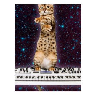 Carte Postale chat de clavier - chats drôles - amoureux de les