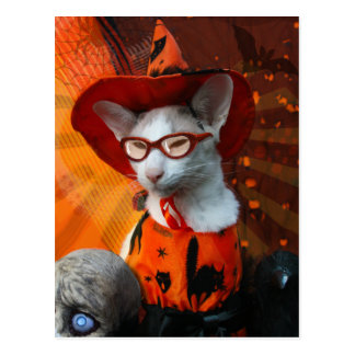 Carte Postale Chat de Halloween