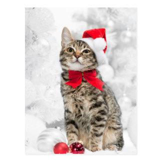 Carte Postale Chat de Noël au casquette rouge de Père Noël près