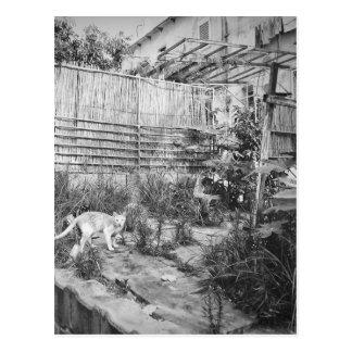 Carte Postale chat de rue