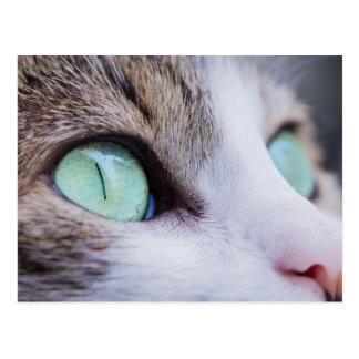 Carte Postale Chat de tigre gris avec les yeux vert clair