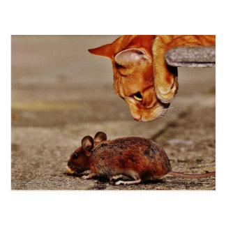 Carte Postale Chat de tigre orange espiègle avec une souris