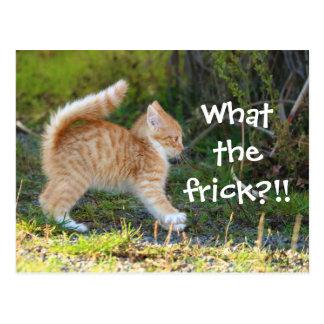 Carte Postale Chat étonné drôle. Ce qui le frick ?