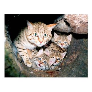Carte Postale Chat sauvage asiatique
