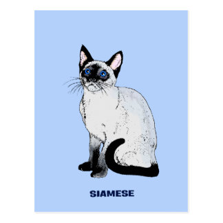 Carte Postale Chat siamois