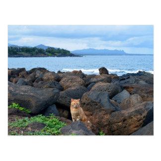 Carte Postale Chat tigré orange, Kauai, Hawaï