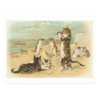 """Carte Postale """"Chats cru sur plage"""""""