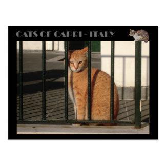 Carte Postale Chats de Capri, chat tigré orange rouge - Italie