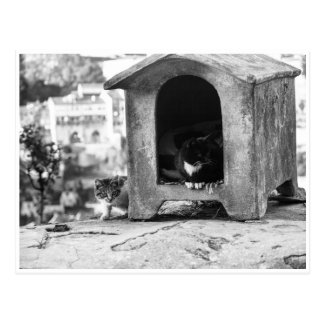 Carte Postale Chats vintages b/w