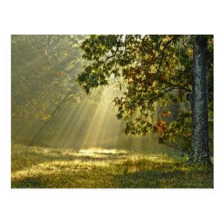 Carte Postale Chêne avec des rayons de soleil de matin