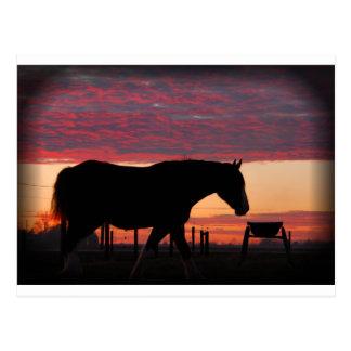 Carte Postale Cheval au coucher du soleil