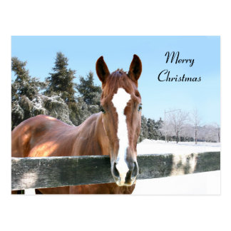 Carte Postale Cheval de Joyeux Noël