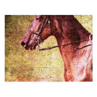 Carte Postale Cheval de montagne rocheuse