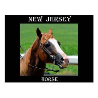 Carte Postale Cheval de New Jersey