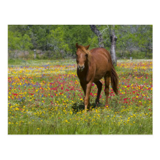 Carte Postale Cheval quart dans le domaine des fleurs sauvages