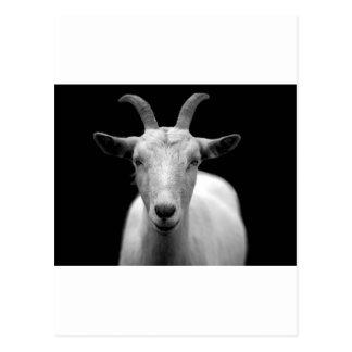 Carte Postale Chèvre