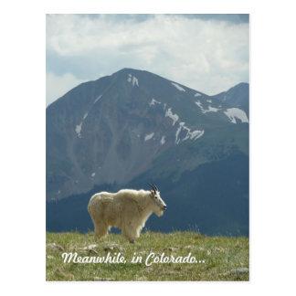 Carte Postale Chèvre de montagne sur le grand clivage