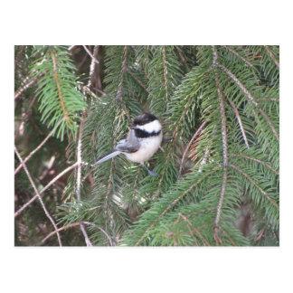 Carte Postale Chickadee dans un pin
