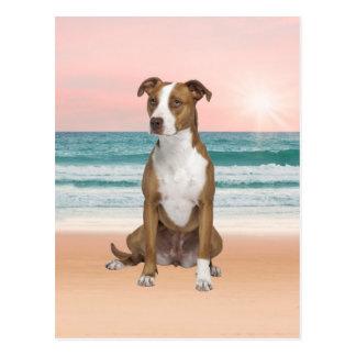 Carte Postale Chien mignon de Pitbull se reposant sur la plage