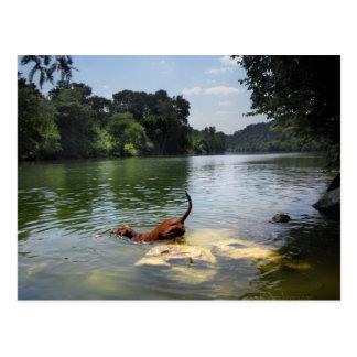 Carte Postale Chien nageant le lac ladybird - Austin du centre
