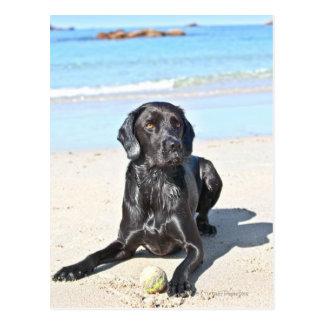 Carte Postale Chien noir de Labrador se reposant sur la plage