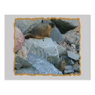 Carte Postale Chiens de prairie animaux de nature de faune de
