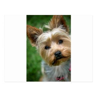 """Carte Postale Chiot de Yorkshire Terrier - """"conception de"""