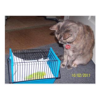 Carte Postale Chloe le chat vous aidant à détendre