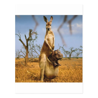 Carte Postale Choc abstrait de bébé de kangourou d'animaux