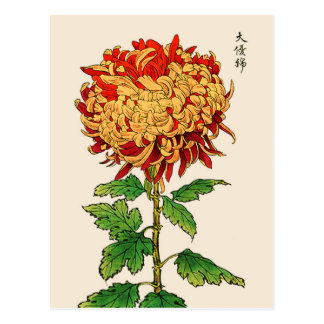 Carte Postale Chrysanthème japonais vintage. Or et orange