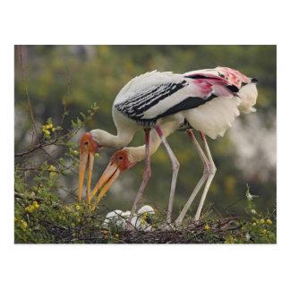Carte Postale Cigognes et youn peints une au nid, Keoladeo