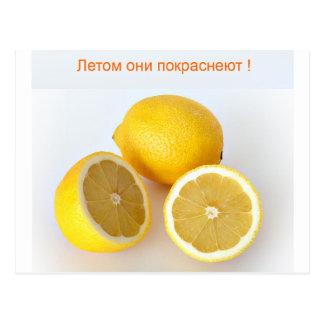 Carte Postale Citrons