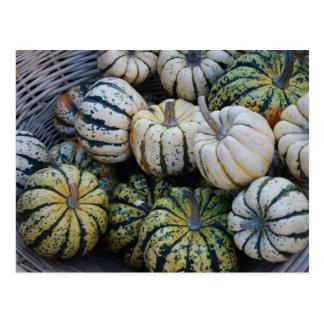 Carte Postale Citrouilles, courges, récolte d'automne