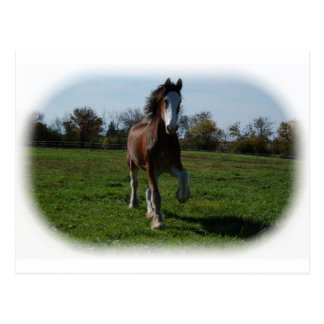 Carte Postale Clydesdale fonctionnant