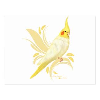 Carte Postale Cockatiel de Lutino