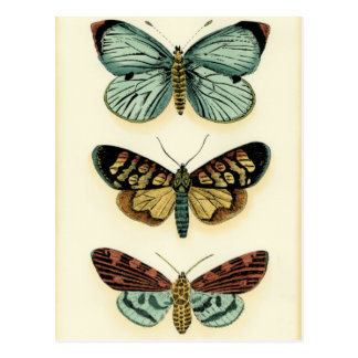 Carte Postale Collection de papillon par Chariklia Zarris