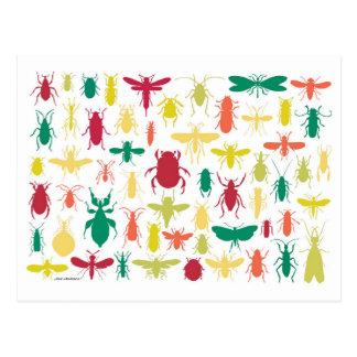 Carte Postale Collection d'insecte