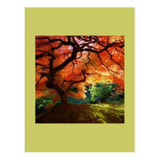 Carte Postale COLLINE rouge d'arbre