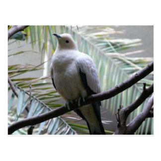 Carte Postale colombe