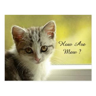 Carte Postale Comment soyez miaulent le chaton