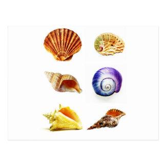 Carte Postale conception de coquille de mer lumineuse et colorée