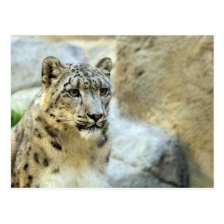 Carte Postale Conception de grand chat de léopard de neige